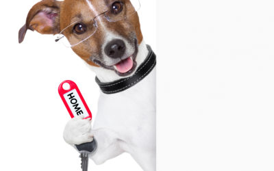 Selling Your House? Better Get a Pet! No Really, Pets Sell Homes