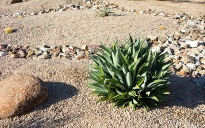 If You're Going to Sell Your House, See Drought-Tolerant Landscaping